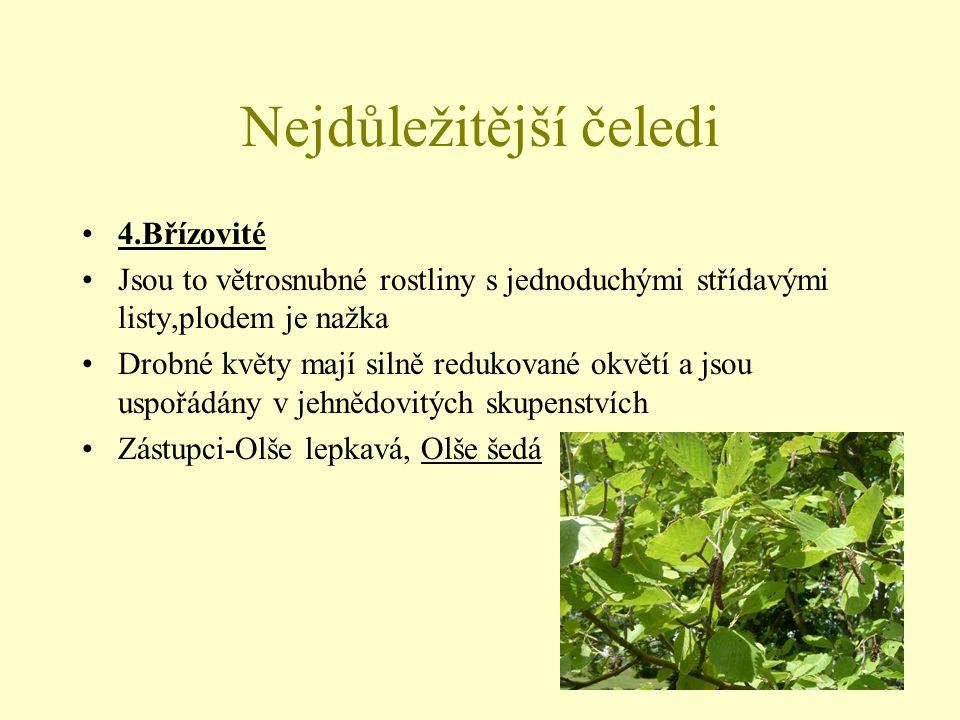 Nejdůležitější čeledi 5.Lískovité Nahé květy, typ plodu-oříšek Zástupci-Líska obecná (lesy nižších poloh), Habr obecný (listnaté lesy nižších poloh, je to stínobytná dřeviny s hladkou, šedě mramorovanou borkou)