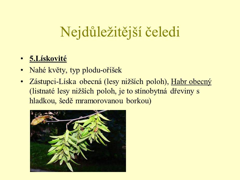 Nejdůležitější čeledi 6.Hvozdíkovité Hmyzosnubné byliny se vstřícnými celistvými listy Květy jsou oboupohlavné, 5četné, s rozlišenými květními obaly, uspořádané ve vrcholičnatých květenstvích Plodem je tobolka, rozšířené v mírném pásmu severní pol.