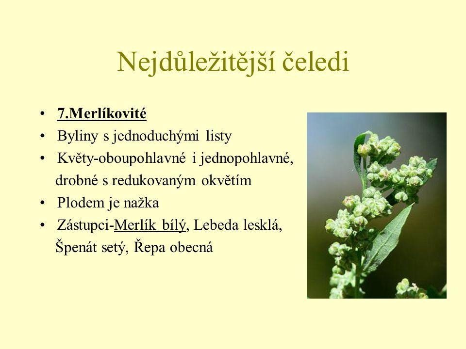 Nejdůležitější čeledi 8.Vrbovité Dvoudomé dřeviny s celistvými střídavými listy Květy-jednopohlavné, bezobalné, skládají jehnědovitá květenství Vrba (vzpřímené jehnědy, opylování hmyzem) Topol (převislé jehnědy, opylování větrem) Zástupci-Vrba bílá, Vrba křehká, Vrba jíva, Topol černý, Topol bílý