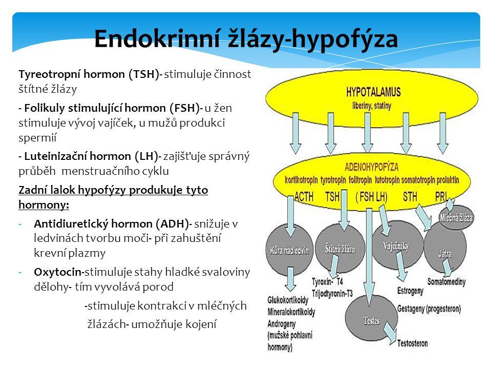 Tyreotropní hormon (TSH)- stimuluje činnost štítné žlázy - Folikuly stimulující hormon (FSH)- u žen stimuluje vývoj vajíček, u mužů produkci spermií -