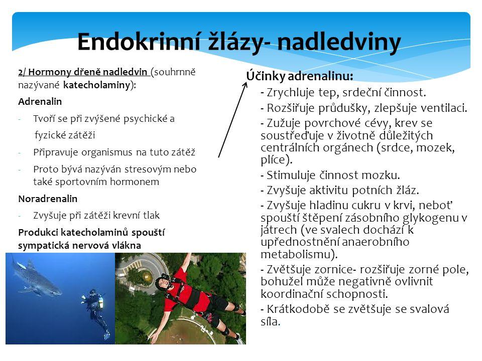 2/ Hormony dřeně nadledvin (souhrnně nazývané katecholaminy): Adrenalin -Tvoří se při zvýšené psychické a fyzické zátěži -Připravuje organismus na tut