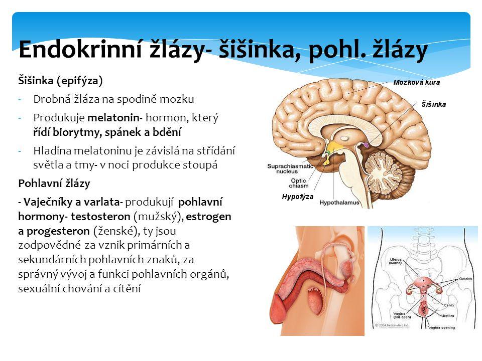 Šišinka (epifýza) -Drobná žláza na spodině mozku -Produkuje melatonin- hormon, který řídí biorytmy, spánek a bdění -Hladina melatoninu je závislá na s