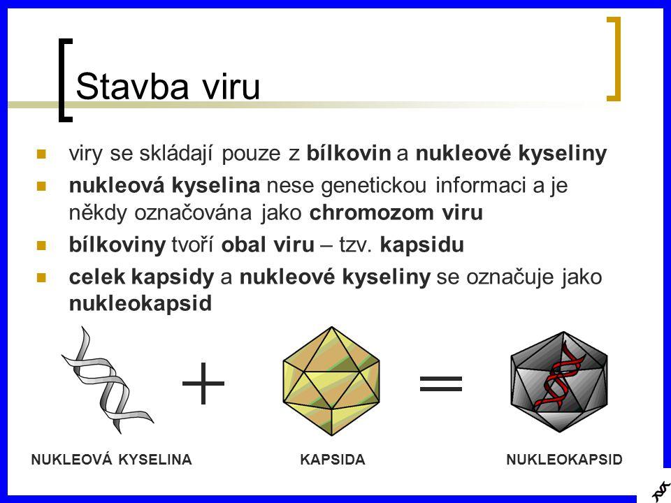 Stavba viru viry se skládají pouze z bílkovin a nukleové kyseliny nukleová kyselina nese genetickou informaci a je někdy označována jako chromozom viru bílkoviny tvoří obal viru – tzv.
