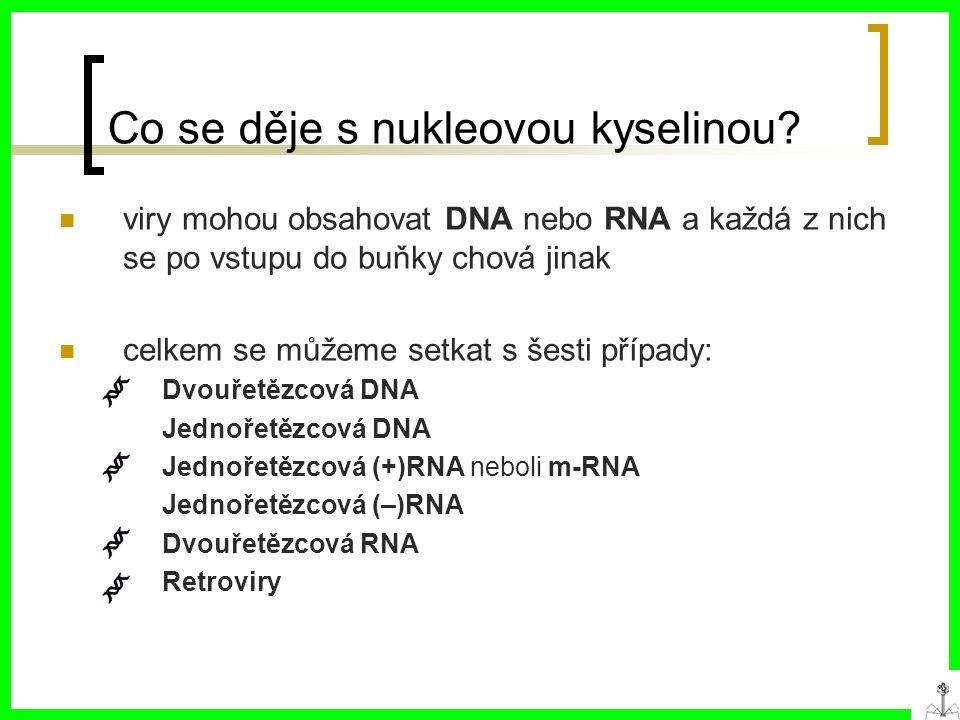 Co se děje s nukleovou kyselinou.