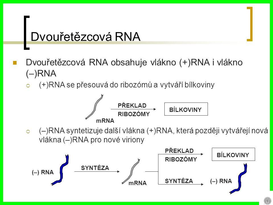 Dvouřetězcová RNA Dvouřetězcová RNA obsahuje vlákno (+)RNA i vlákno (–)RNA ((+)RNA se přesouvá do ribozómů a vytváří bílkoviny ((–)RNA syntetizuje další vlákna (+)RNA, která později vytvářejí nová vlákna (–)RNA pro nové viriony PŘEKLAD RIBOZÓMY BÍLKOVINY mRNA SYNTÉZA (–) RNA PŘEKLAD RIBOZÓMY BÍLKOVINY SYNTÉZA (–) RNA mRNA