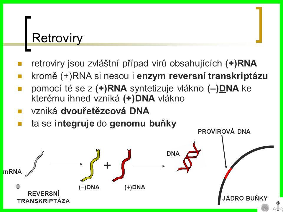 Retroviry retroviry jsou zvláštní případ virů obsahujících (+)RNA kromě (+)RNA si nesou i enzym reversní transkriptázu pomocí té se z (+)RNA syntetizuje vlákno (–)DNA ke kterému ihned vzniká (+)DNA vlákno vzniká dvouřetězcová DNA ta se integruje do genomu buňky mRNA REVERSNÍ TRANSKRIPTÁZA (–)DNA + DNA (+)DNA JÁDRO BUŇKY PROVIROVÁ DNA
