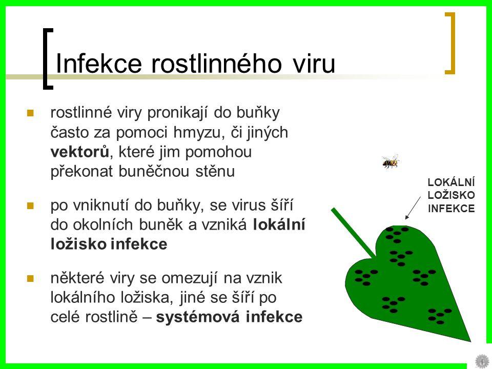 Infekce rostlinného viru rostlinné viry pronikají do buňky často za pomoci hmyzu, či jiných vektorů, které jim pomohou překonat buněčnou stěnu po vniknutí do buňky, se virus šíří do okolních buněk a vzniká lokální ložisko infekce některé viry se omezují na vznik lokálního ložiska, jiné se šíří po celé rostlině – systémová infekce LOKÁLNÍ LOŽISKO INFEKCE
