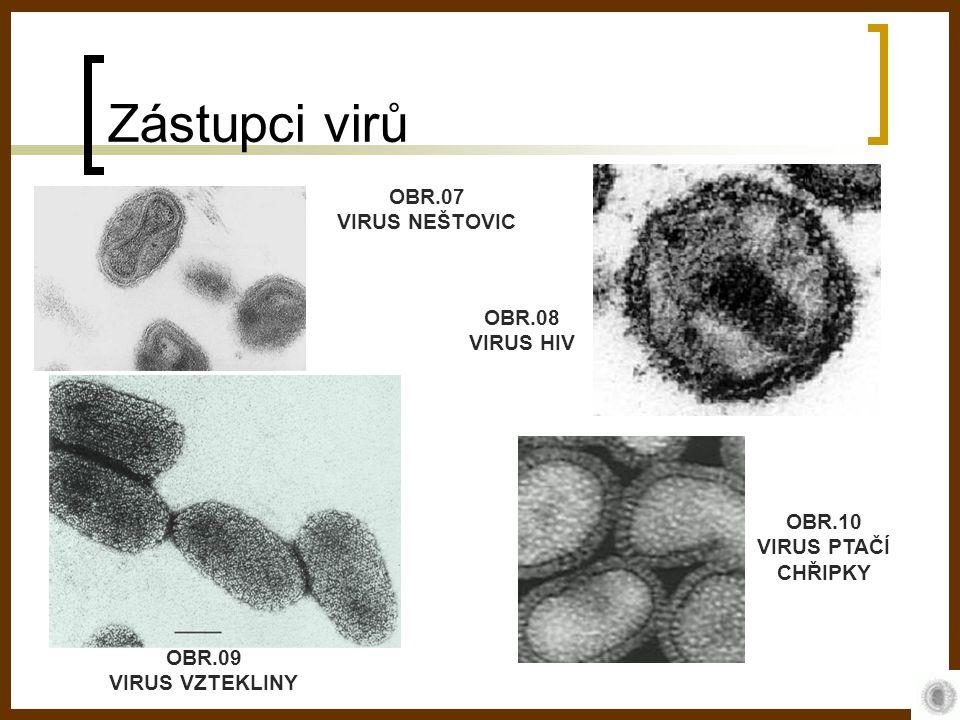 Zástupci virů OBR.07 VIRUS NEŠTOVIC OBR.08 VIRUS HIV OBR.09 VIRUS VZTEKLINY OBR.10 VIRUS PTAČÍ CHŘIPKY
