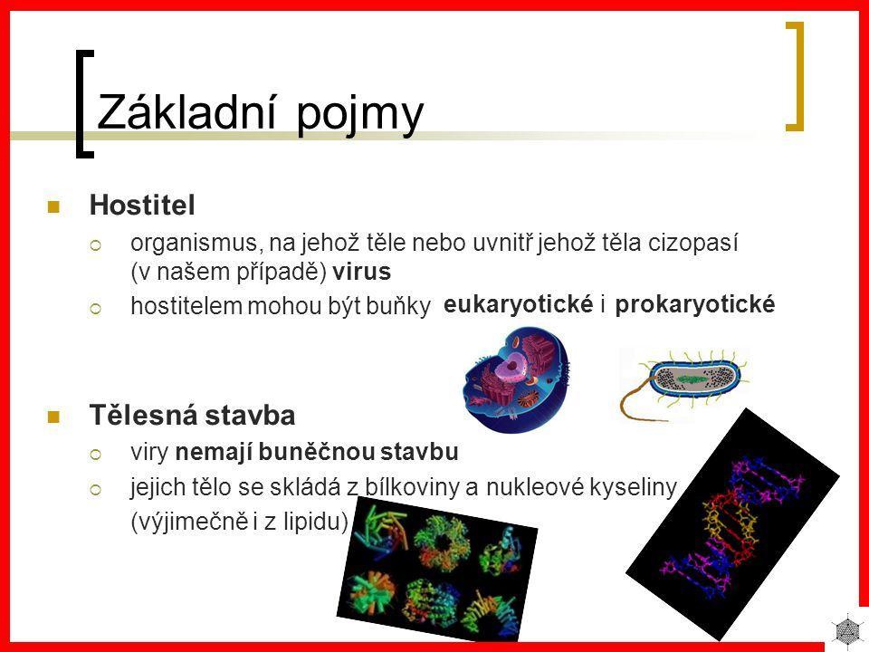 Základní pojmy Hostitel oorganismus, na jehož těle nebo uvnitř jehož těla cizopasí (v našem případě) virus hhostitelem mohou být buňky Tělesná stavba vviry nemají buněčnou stavbu jjejich tělo se skládá z bílkoviny a nukleové kyseliny (výjimečně i z lipidu) eukaryoticképrokaryotickéi