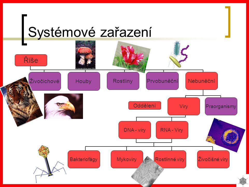 Systémové zařazení Říše NebuněčníPrvobuněčníRostliny HoubyŽivočichové PraorganismyViry Oddělení DNA - viryRNA - Viry BakteriofágyMykoviryRostlinné viryŽivočišné viry