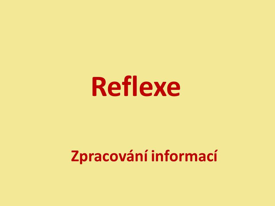 Reflexe Zpracování informací