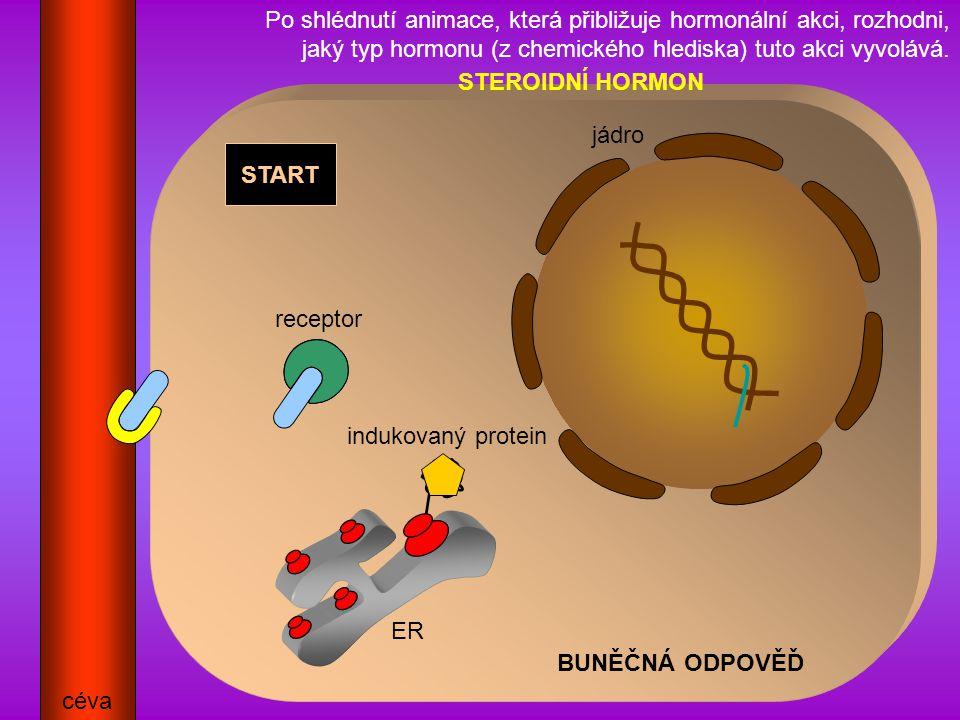 BUNĚČNÁ ODPOVĚĎ START céva ER jádro receptor indukovaný protein Po shlédnutí animace, která přibližuje hormonální akci, rozhodni, jaký typ hormonu (z