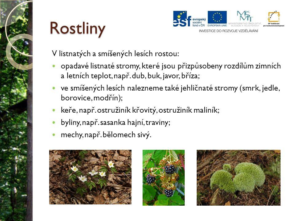 Rostliny V listnatých a smíšených lesích rostou: opadavé listnaté stromy, které jsou přizpůsobeny rozdílům zimních a letních teplot, např. dub, buk, j