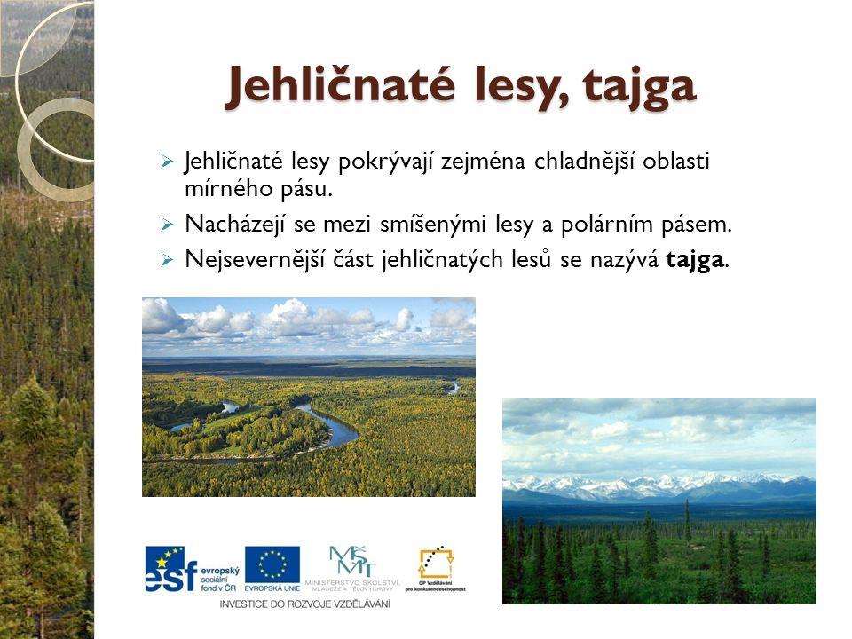 Jehličnaté lesy, tajga  Jehličnaté lesy pokrývají zejména chladnější oblasti mírného pásu.  Nacházejí se mezi smíšenými lesy a polárním pásem.  Nej