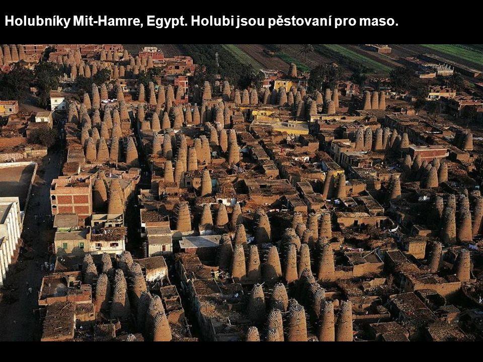 Holubníky Mit-Hamre, Egypt. Holubi jsou pěstovaní pro maso.
