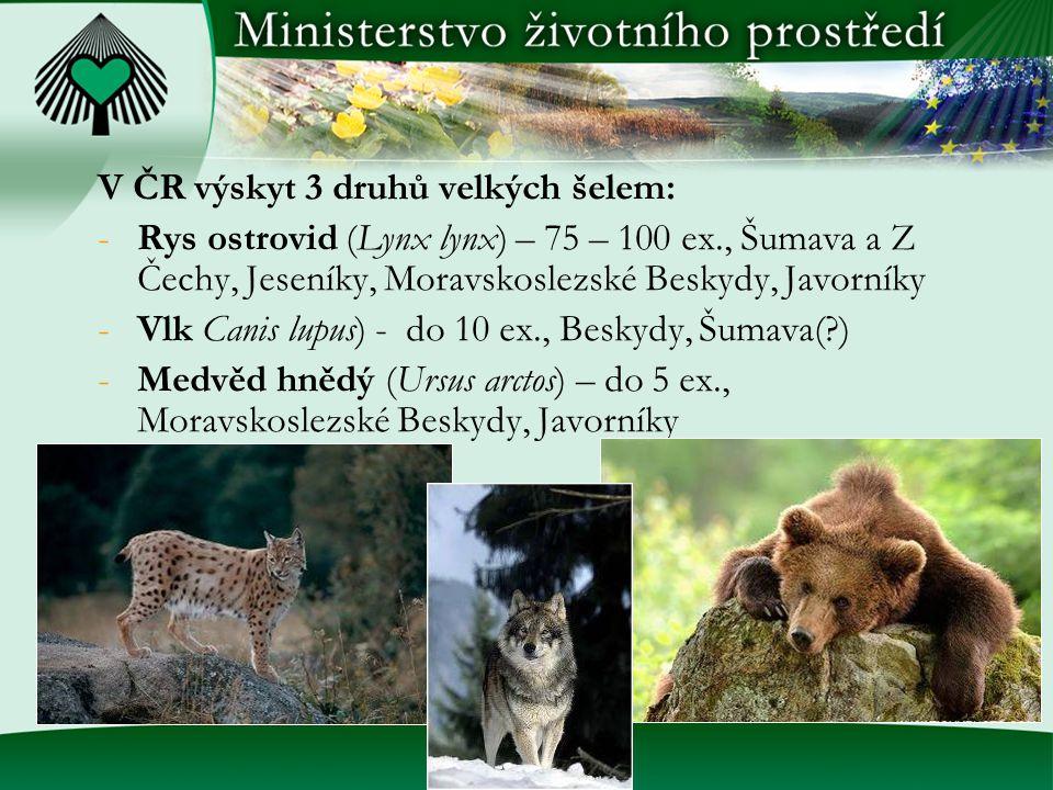 V ČR výskyt 3 druhů velkých šelem: -Rys ostrovid (Lynx lynx) – 75 – 100 ex., Šumava a Z Čechy, Jeseníky, Moravskoslezské Beskydy, Javorníky -Vlk Canis