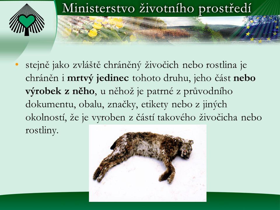 stejně jako zvláště chráněný živočich nebo rostlina je chráněn i mrtvý jedinec tohoto druhu, jeho část nebo výrobek z něho, u něhož je patrné z průvod