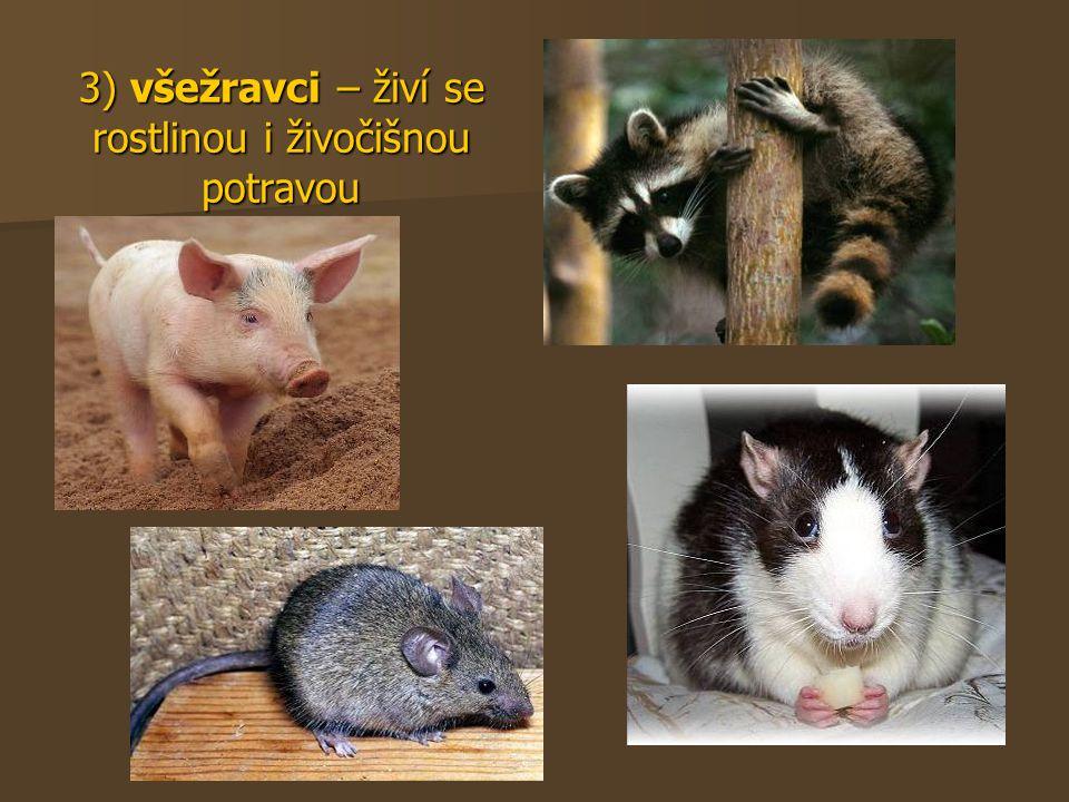 3) všežravci – živí se rostlinou i živočišnou potravou