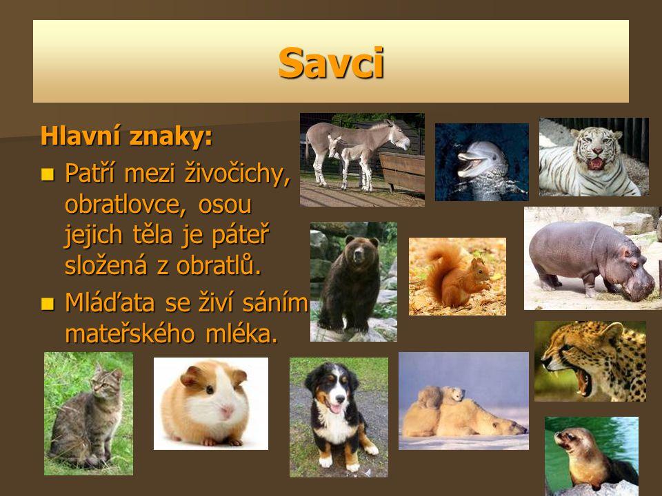 Savci Hlavní znaky: Patří mezi živočichy, obratlovce, osou jejich těla je páteř složená z obratlů. Patří mezi živočichy, obratlovce, osou jejich těla