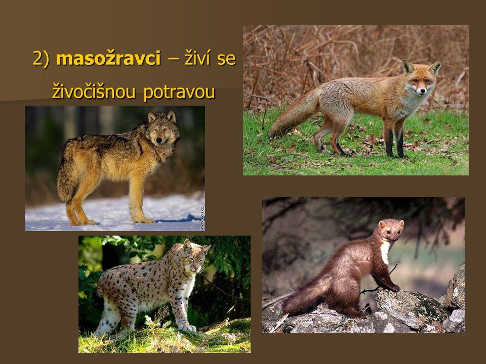 2) masožravci – živí se živočišnou potravou