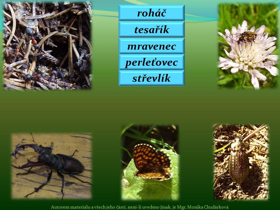roháč tesařík mravenec perleťovec střevlík Autorem materiálu a všech jeho částí, není-li uvedeno jinak, je Mgr. Monika Chudárková