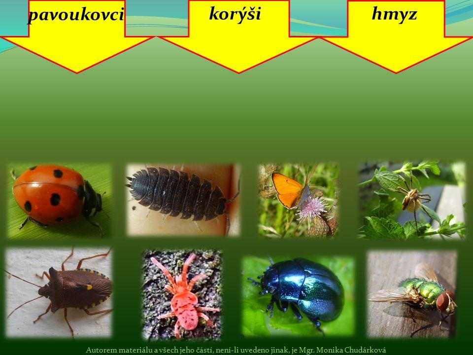 pavoukovci korýšihmyz Autorem materiálu a všech jeho částí, není-li uvedeno jinak, je Mgr. Monika Chudárková