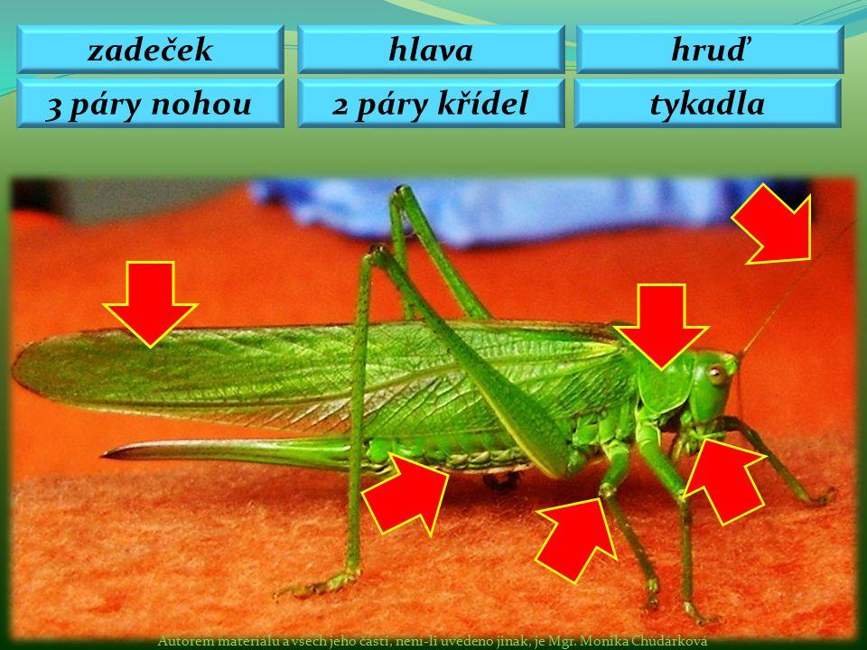 Mravenec lesní – sociální hmyz, více matek, dělnice.