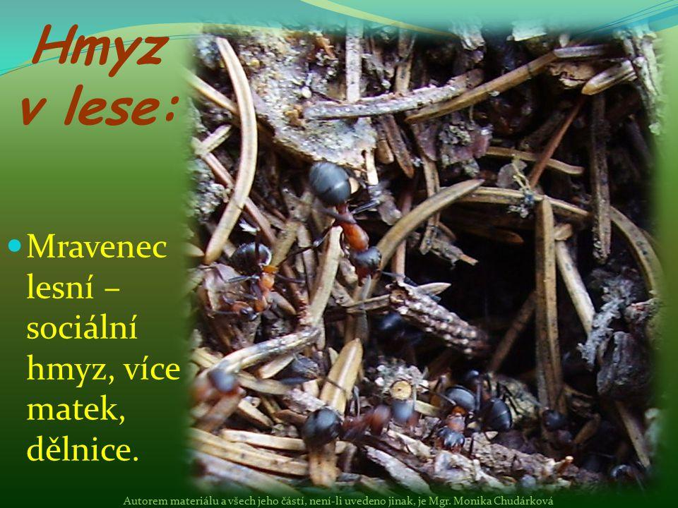 Sociální hmyz – žije v organizovaném společenství, staví si mraveniště Autorem materiálu a všech jeho částí, není-li uvedeno jinak, je Mgr.