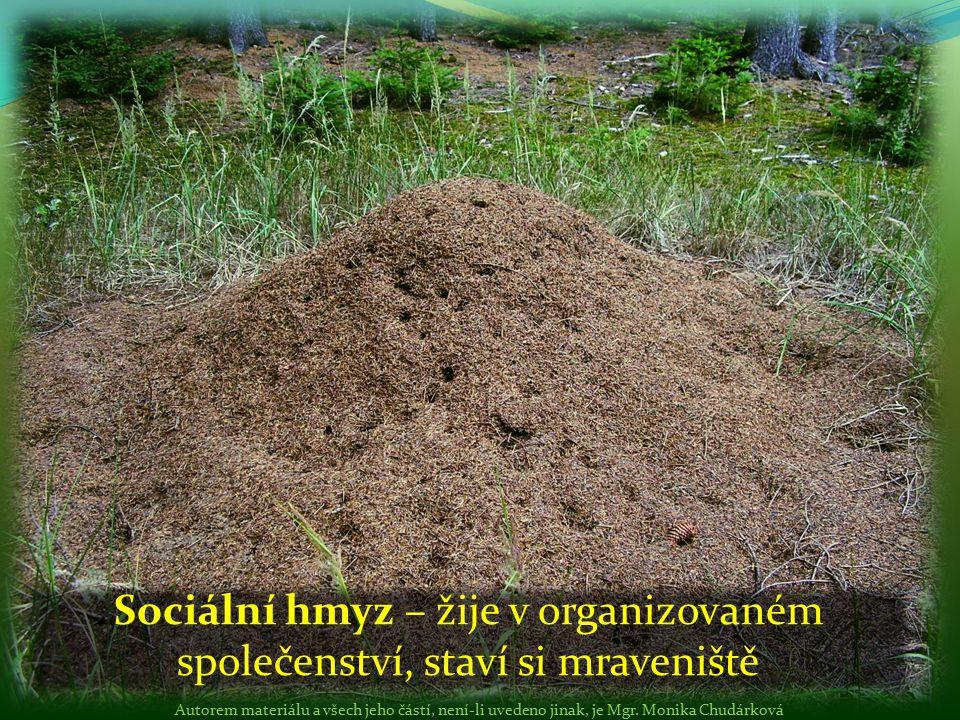 Sociální hmyz – žije v organizovaném společenství, staví si mraveniště Autorem materiálu a všech jeho částí, není-li uvedeno jinak, je Mgr. Monika Chu
