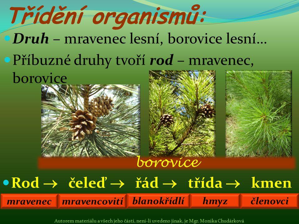 Druh – mravenec lesní, borovice lesní… Příbuzné druhy tvoří rod – mravenec, borovice Třídění organismů: Rod  čeleď  řád  třída  kmen borovice mrav