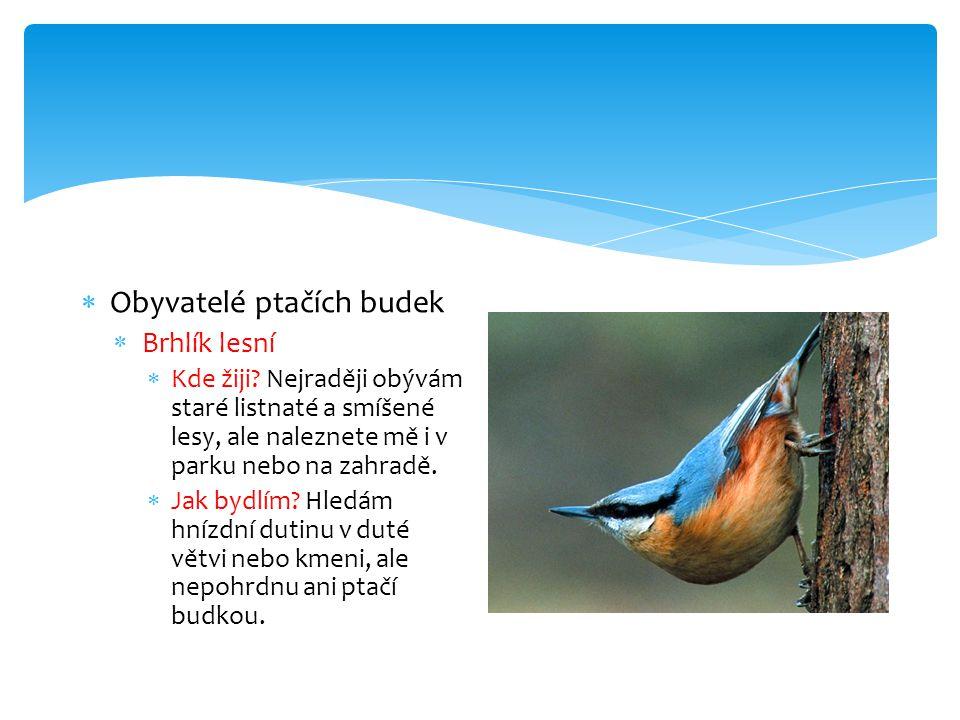  Obyvatelé ptačích budek  Brhlík lesní  Kde žiji.