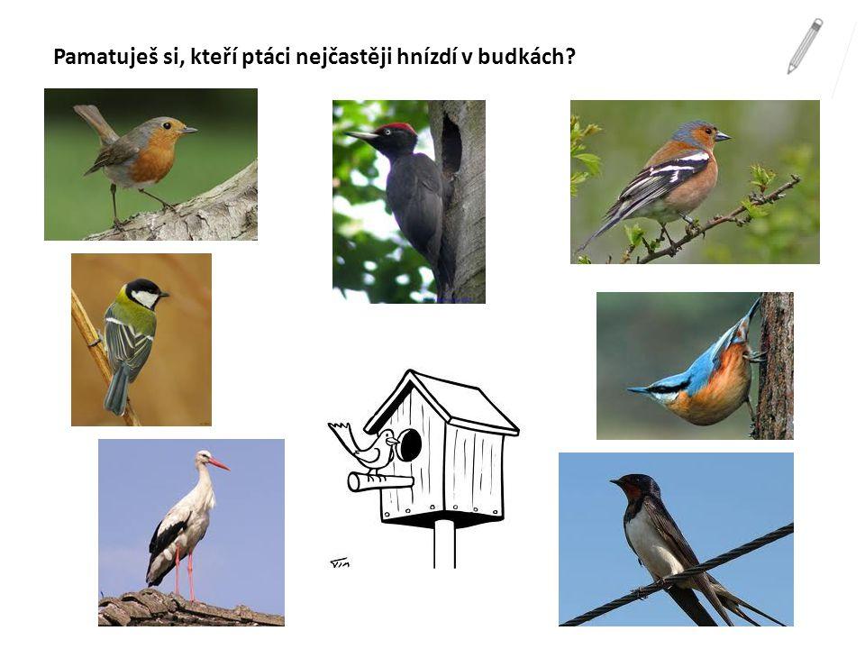 Pamatuješ si, kteří ptáci nejčastěji hnízdí v budkách?