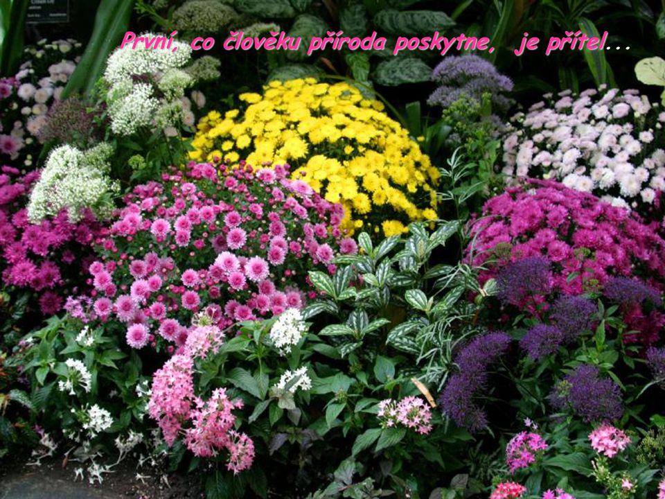 První, co člověku příroda poskytne, je přítel První, co člověku příroda poskytne, je přítel...