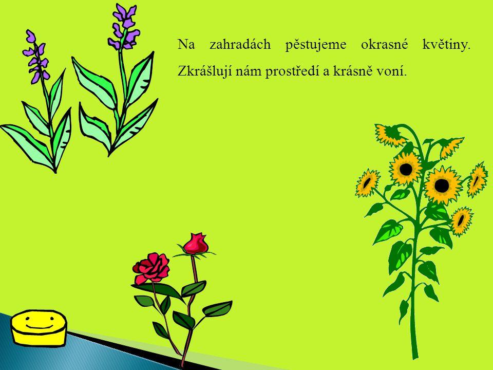Na zahradách pěstujeme okrasné květiny. Zkrášlují nám prostředí a krásně voní.