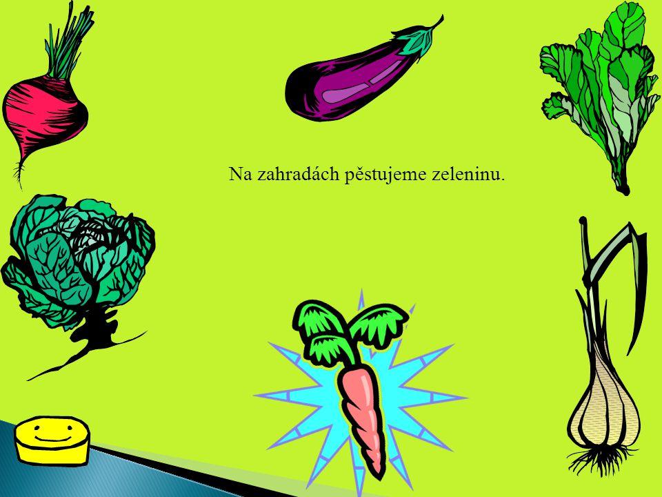 Na zahradách pěstujeme zeleninu.