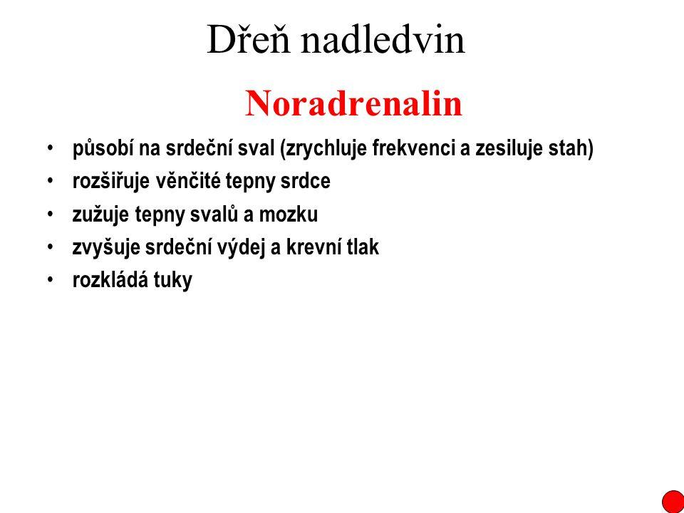 Dřeň nadledvin Noradrenalin působí na srdeční sval (zrychluje frekvenci a zesiluje stah) rozšiřuje věnčité tepny srdce zužuje tepny svalů a mozku zvyš