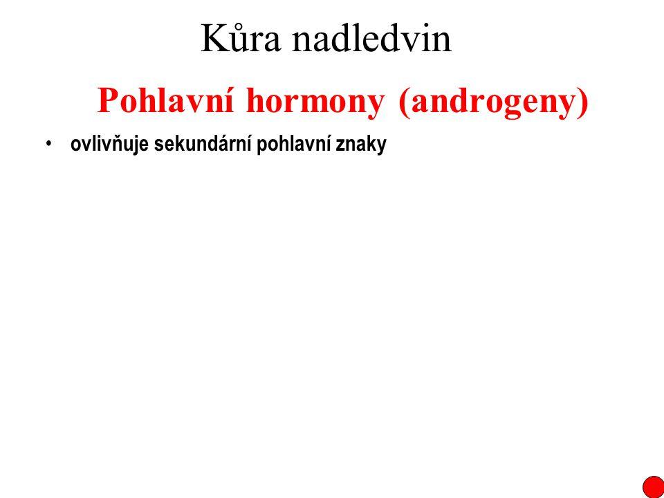 Kůra nadledvin Pohlavní hormony (androgeny) ovlivňuje sekundární pohlavní znaky