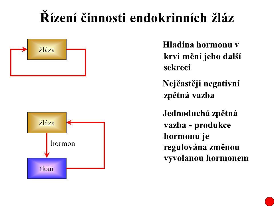 Řízení činnosti endokrinních žláz Hladina hormonu v krvi mění jeho další sekreci žláza Nejčastěji negativní zpětná vazba Jednoduchá zpětná vazba - pro