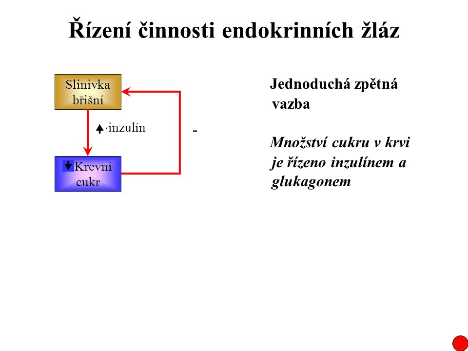 Řízení činnosti endokrinních žláz Slinivka břišní  Krevní cukr inzulín Jednoduchá zpětná vazba  - +  - Množství cukru v krvi je řízeno inzulínem a
