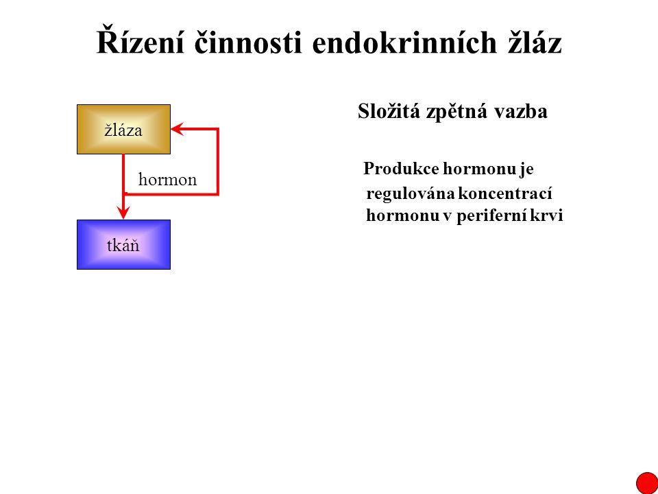 Řízení činnosti endokrinních žláz žláza tkáň hormon Složitá zpětná vazba Produkce hormonu je regulována koncentrací hormonu v periferní krvi