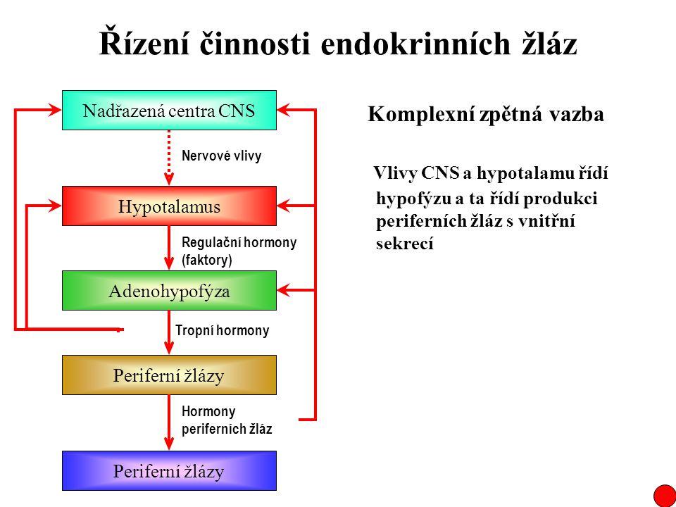 Řízení činnosti endokrinních žláz Komplexní zpětná vazba Vlivy CNS a hypotalamu řídí hypofýzu a ta řídí produkci periferních žláz s vnitřní sekrecí Na