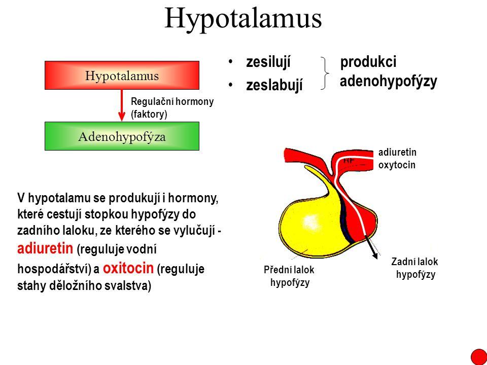 Hypotalamus zesilují zeslabují Hypotalamus Adenohypofýza Regulační hormony (faktory) produkci adenohypofýzy Zadní lalok hypofýzy Přední lalok hypofýzy