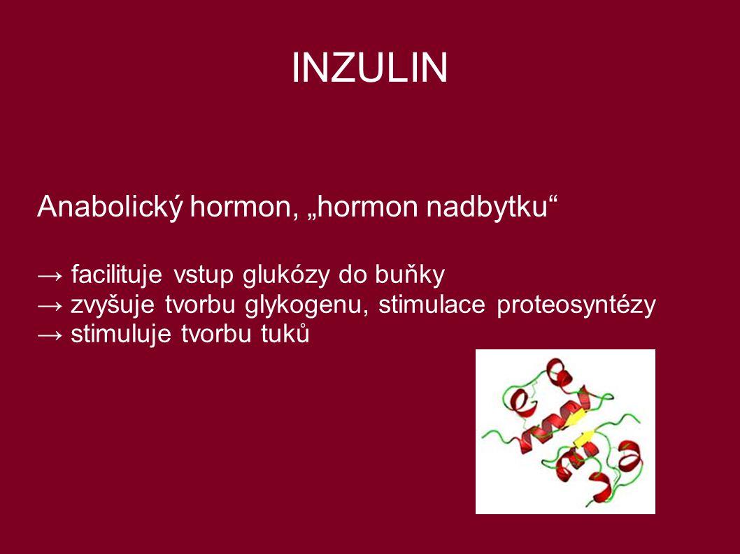 "INZULIN Anabolický hormon, ""hormon nadbytku"" → facilituje vstup glukózy do buňky → zvyšuje tvorbu glykogenu, stimulace proteosyntézy → stimuluje tvorb"