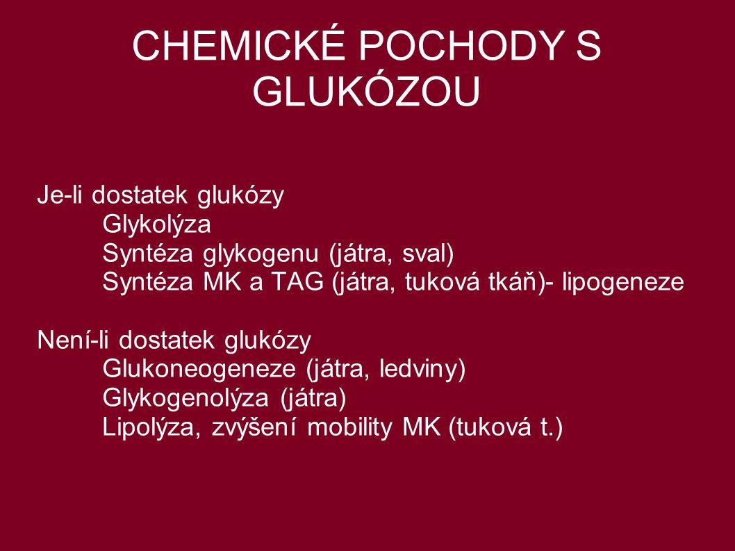 CHEMICKÉ POCHODY S GLUKÓZOU Je-li dostatek glukózy Glykolýza Syntéza glykogenu (játra, sval) Syntéza MK a TAG (játra, tuková tkáň)- lipogeneze Není-li