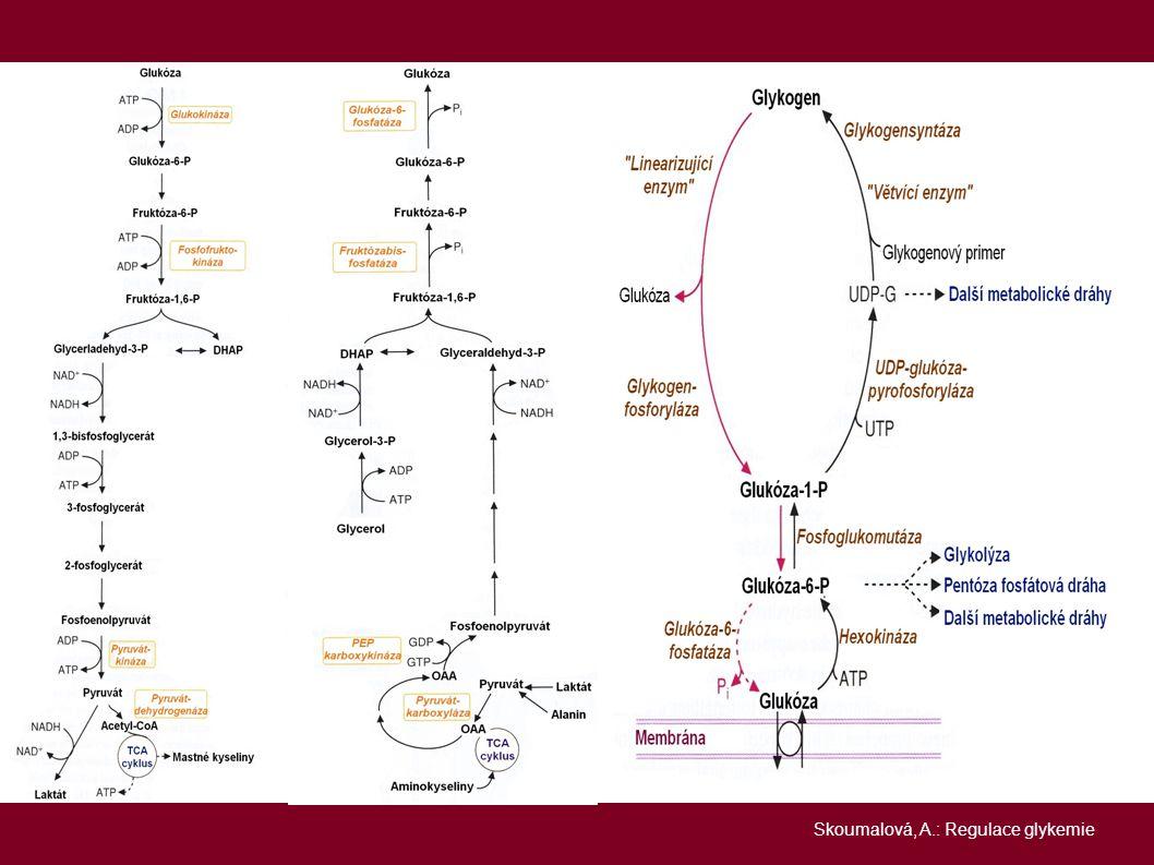 THYROIDNÍ HORMONY → zvyšují resorbci glukózy ve střevě, potencují katecholaminy, způsobuje ztráty jaterního glykogenu (snadno poškoditelná → méně vychytávají glukózu), zrychlují degradaci inzulínu