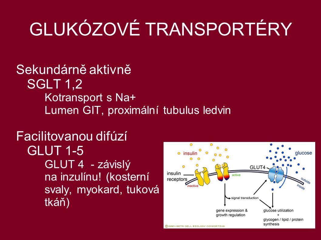 GLUKÓZOVÉ TRANSPORTÉRY Sekundárně aktivně SGLT 1,2 Kotransport s Na+ Lumen GIT, proximální tubulus ledvin Facilitovanou difúzí GLUT 1-5 GLUT 4 - závis