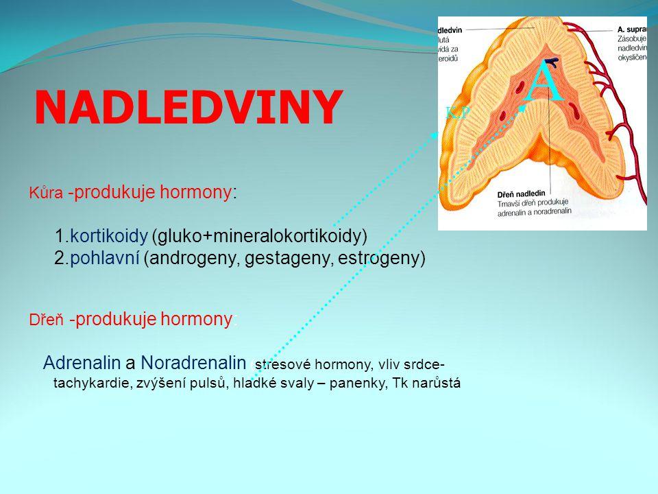 NADLEDVINY Kůra -produkuje hormony: 1.kortikoidy (gluko+mineralokortikoidy) 2.pohlavní (androgeny, gestageny, estrogeny) Dřeň -produkuje hormony: Adrenalin a Noradrenalin (stresové hormony, vliv srdce- tachykardie, zvýšení pulsů, hladké svaly – panenky, Tk narůstá A K,P