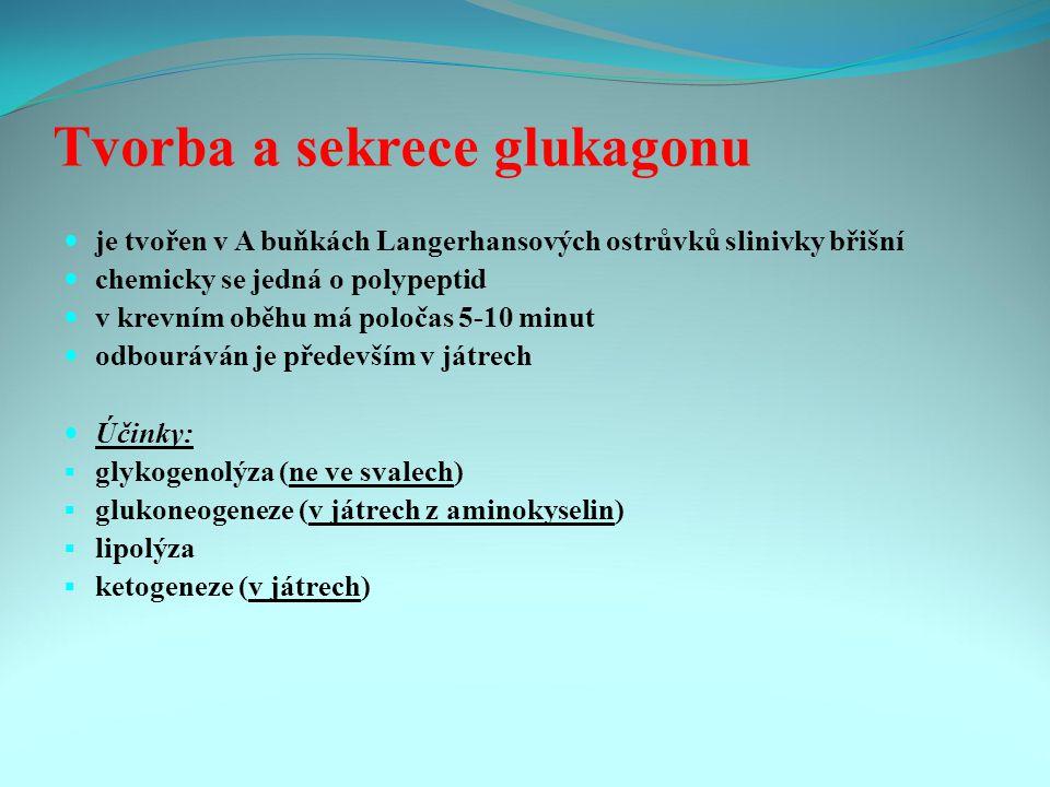 Tvorba a sekrece glukagonu je tvořen v A buňkách Langerhansových ostrůvků slinivky břišní chemicky se jedná o polypeptid v krevním oběhu má poločas 5-10 minut odbouráván je především v játrech Účinky:  glykogenolýza (ne ve svalech)  glukoneogeneze (v játrech z aminokyselin)  lipolýza  ketogeneze (v játrech)