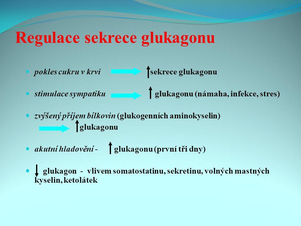 Regulace sekrece glukagonu pokles cukru v krvi sekrece glukagonu stimulace sympatiku glukagonu (námaha, infekce, stres) zvýšený příjem bílkovin (glukogenních aminokyselin) glukagonu akutní hladovění - glukagonu (první tři dny) glukagon - vlivem somatostatinu, sekretinu, volných mastných kyselin, ketolátek