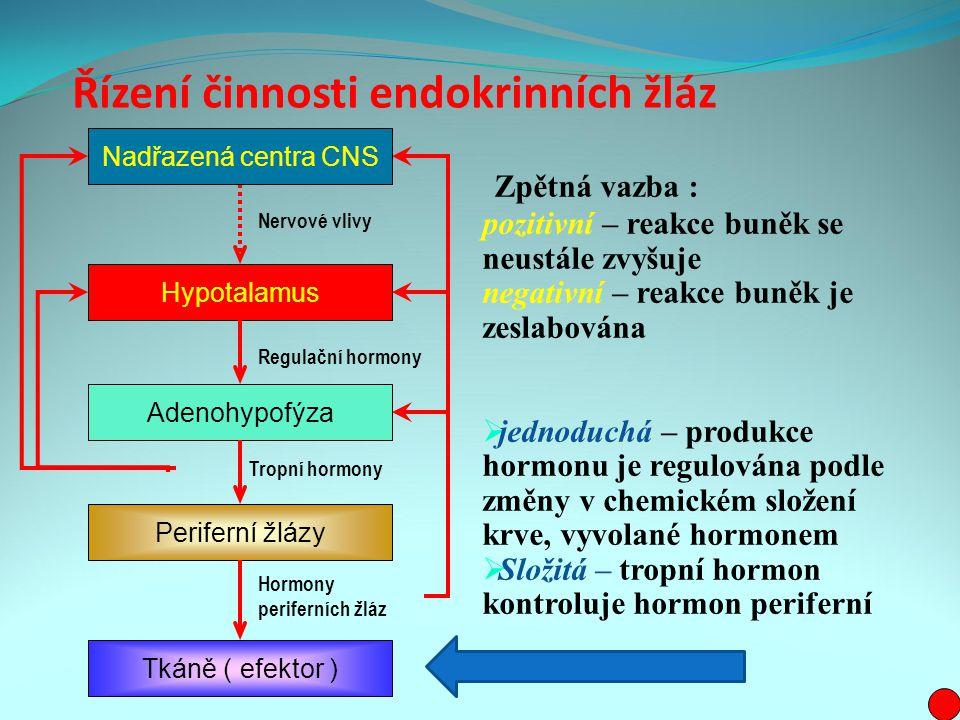 Řízení činnosti endokrinních žláz Zpětná vazba : pozitivní – reakce buněk se neustále zvyšuje negativní – reakce buněk je zeslabována  jednoduchá – produkce hormonu je regulována podle změny v chemickém složení krve, vyvolané hormonem  Složitá – tropní hormon kontroluje hormon periferní Nadřazená centra CNS Hypotalamus Adenohypofýza Periferní žlázy Tkáně ( efektor ) Hormony periferních žláz Tropní hormony Regulační hormony Nervové vlivy